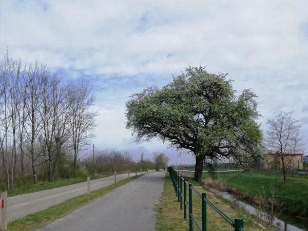 Által-ér kerékpárút – Vadkörtefa